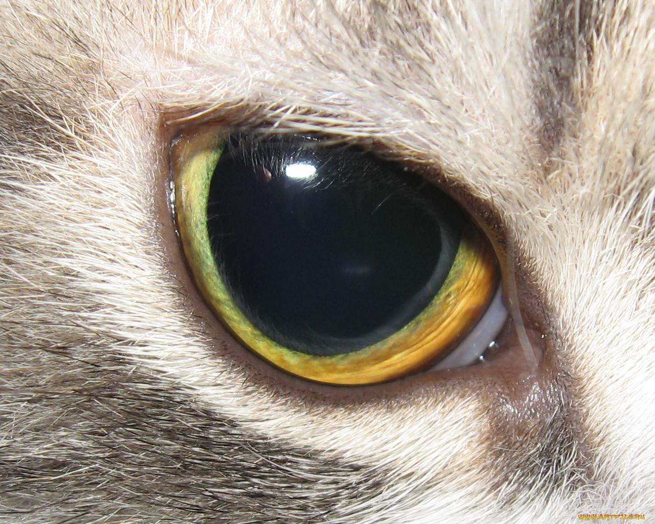 Как сделать глаза как у кошки макияж Визаж и здоровье глаз 74